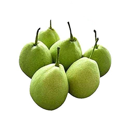 Indian pear (Kashmir)